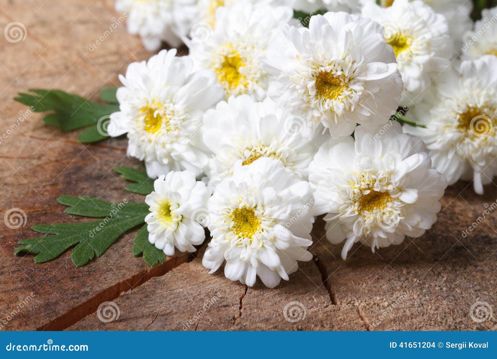 Букет малого белого крупного плана хризантем