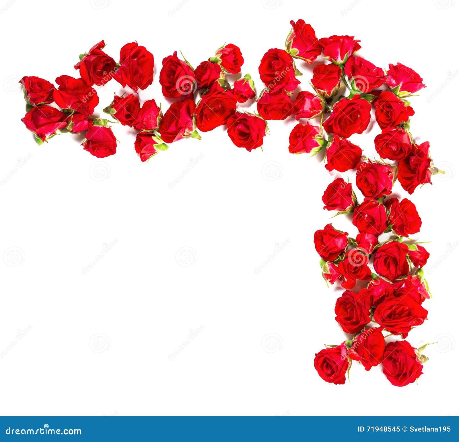 Букет роз аранжированных к форме элемента границы или дизайна для флористических тем