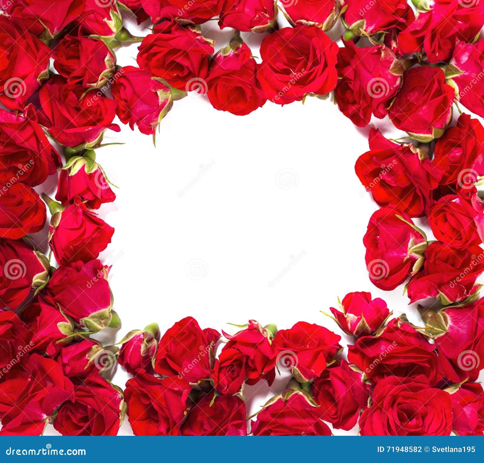 Букет роз аранжированных, что сформировать рамку или конструировать элемент для флористических тем