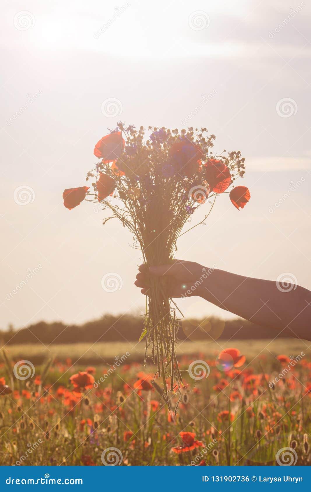 Букет wildflowers в руке женщины в мягком свете захода солнца с предпосылкой поля мака
