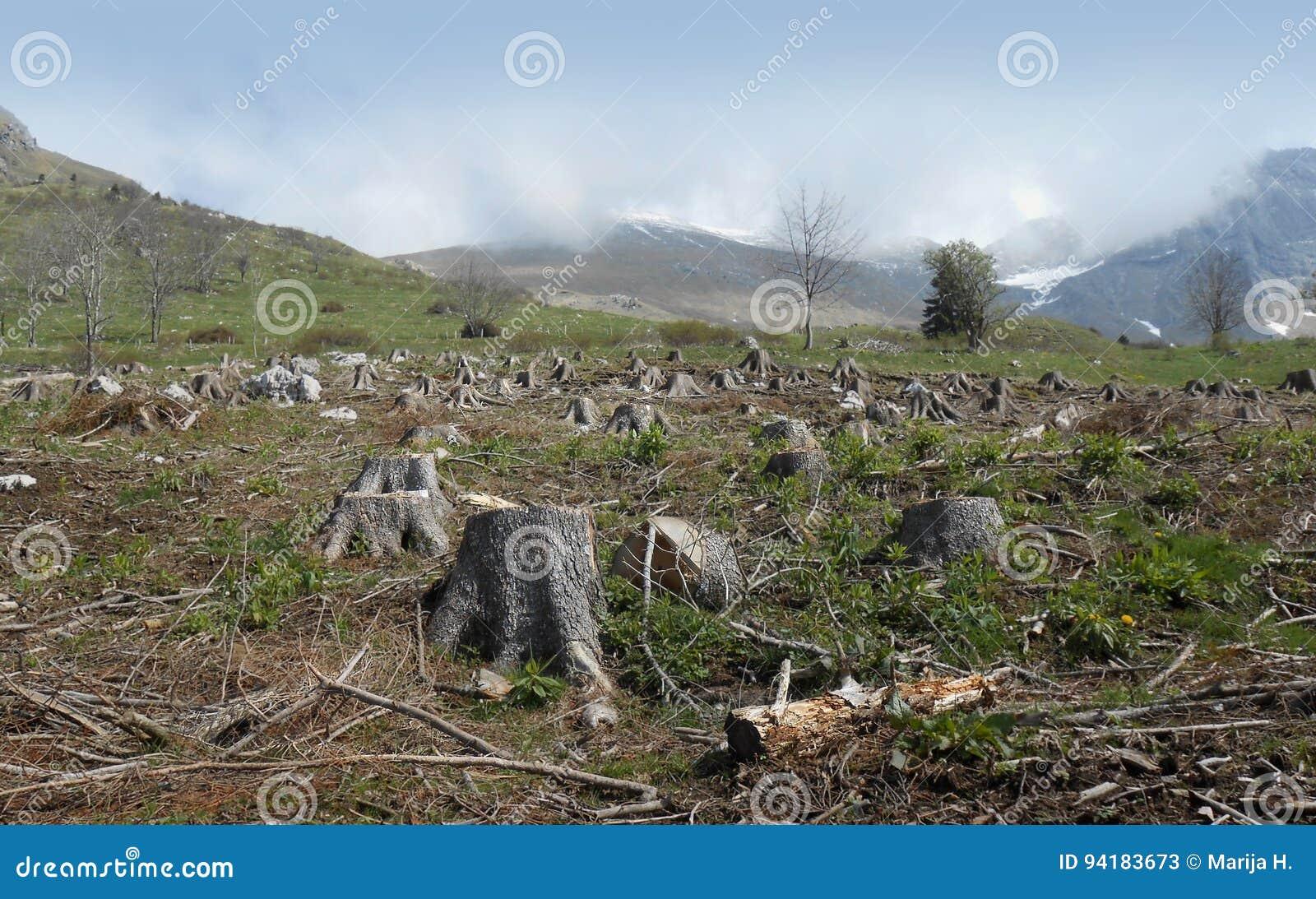 бук Болгарией отрезал pirin горы журналов пущи разрушения вниз