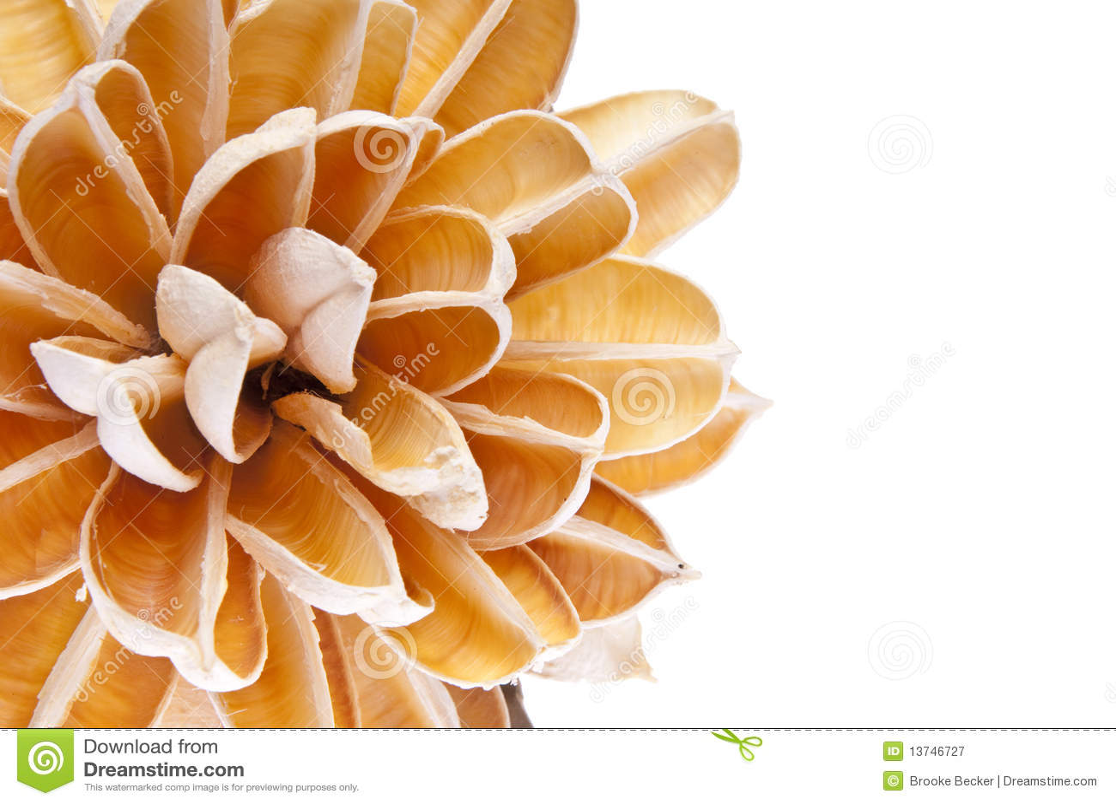 бумага цветка граници