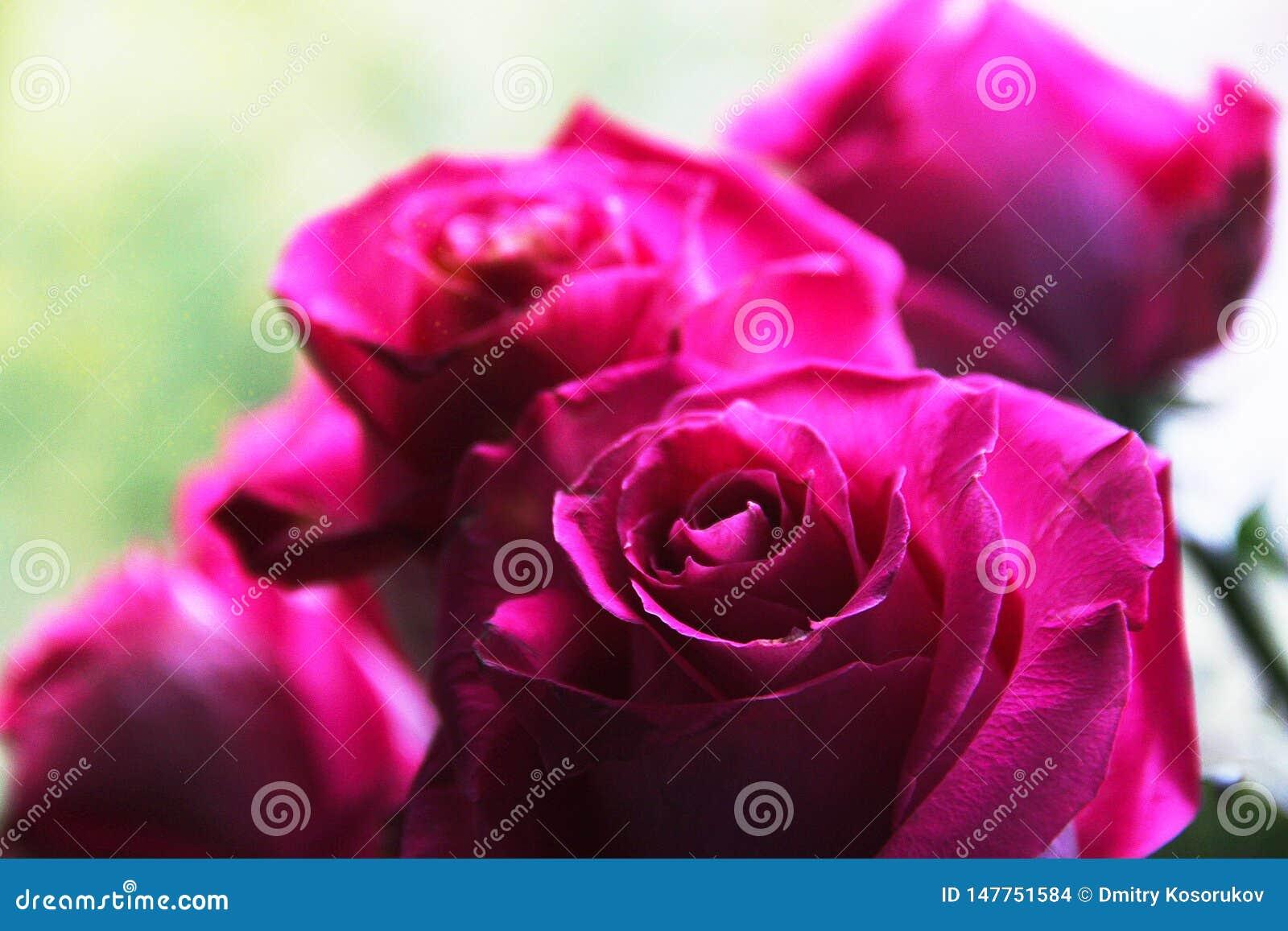 Бутоны пинка большие розовые
