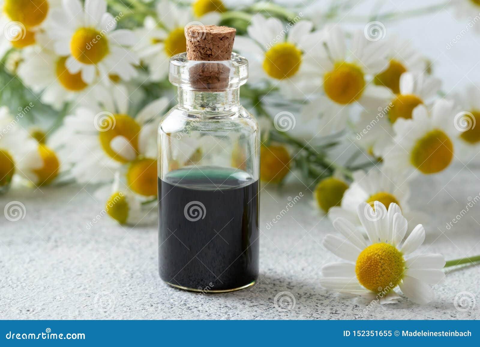 Бутылка темно-синих эфирного масла и цветков стоцвета