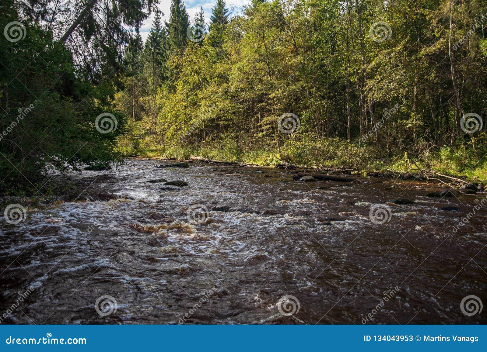 быстрое река в лесе