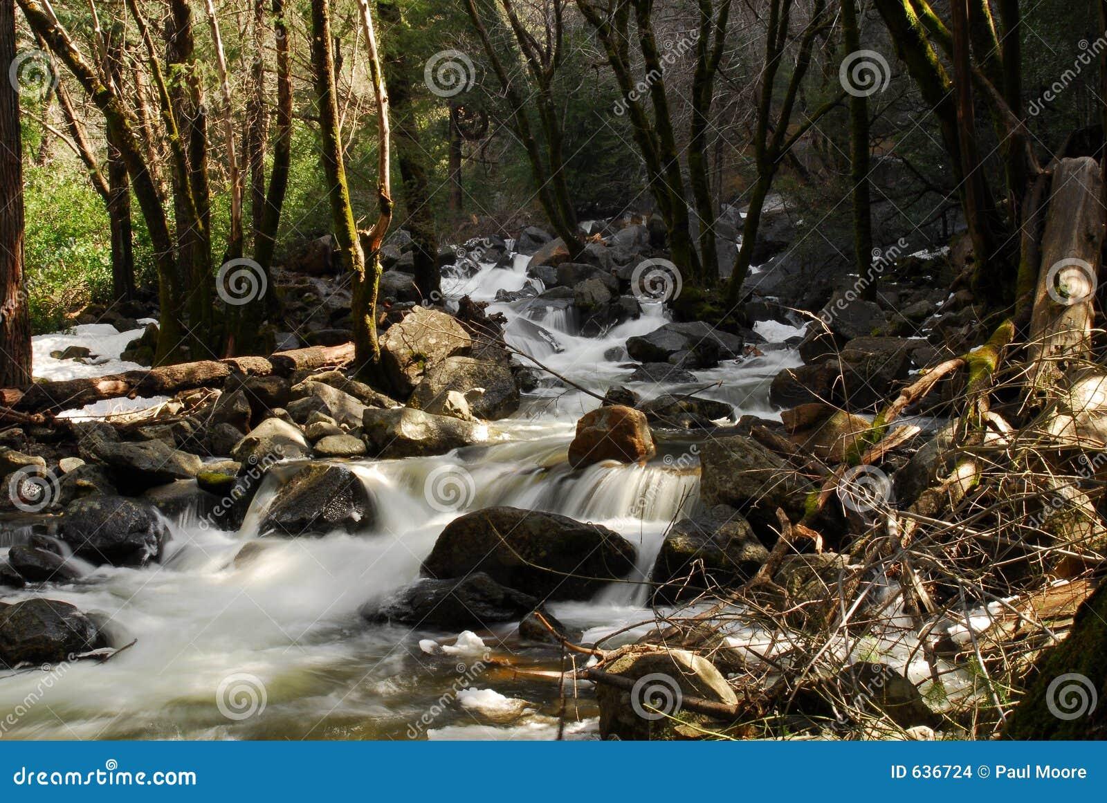 Download быстрый поток стоковое фото. изображение насчитывающей coniferous - 636724