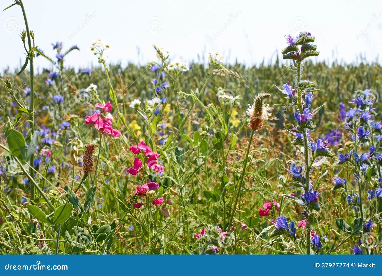 Быстрый цвести диких растений motley разнообразия