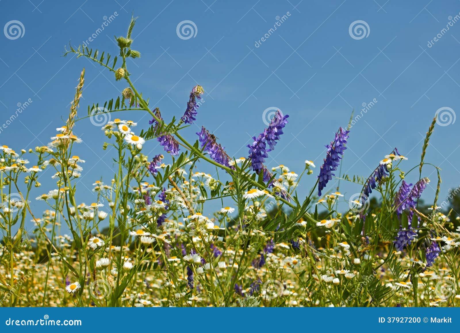 Быстрый цвести трав motley разнообразия одичалых