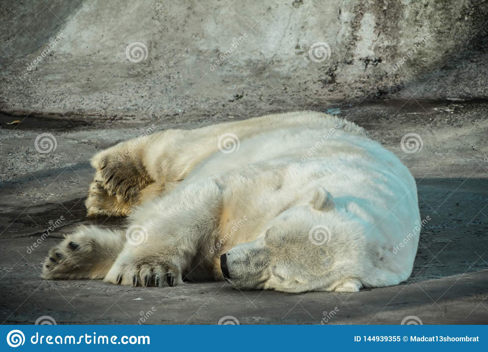 Быть в спящем режиме полярный медведь