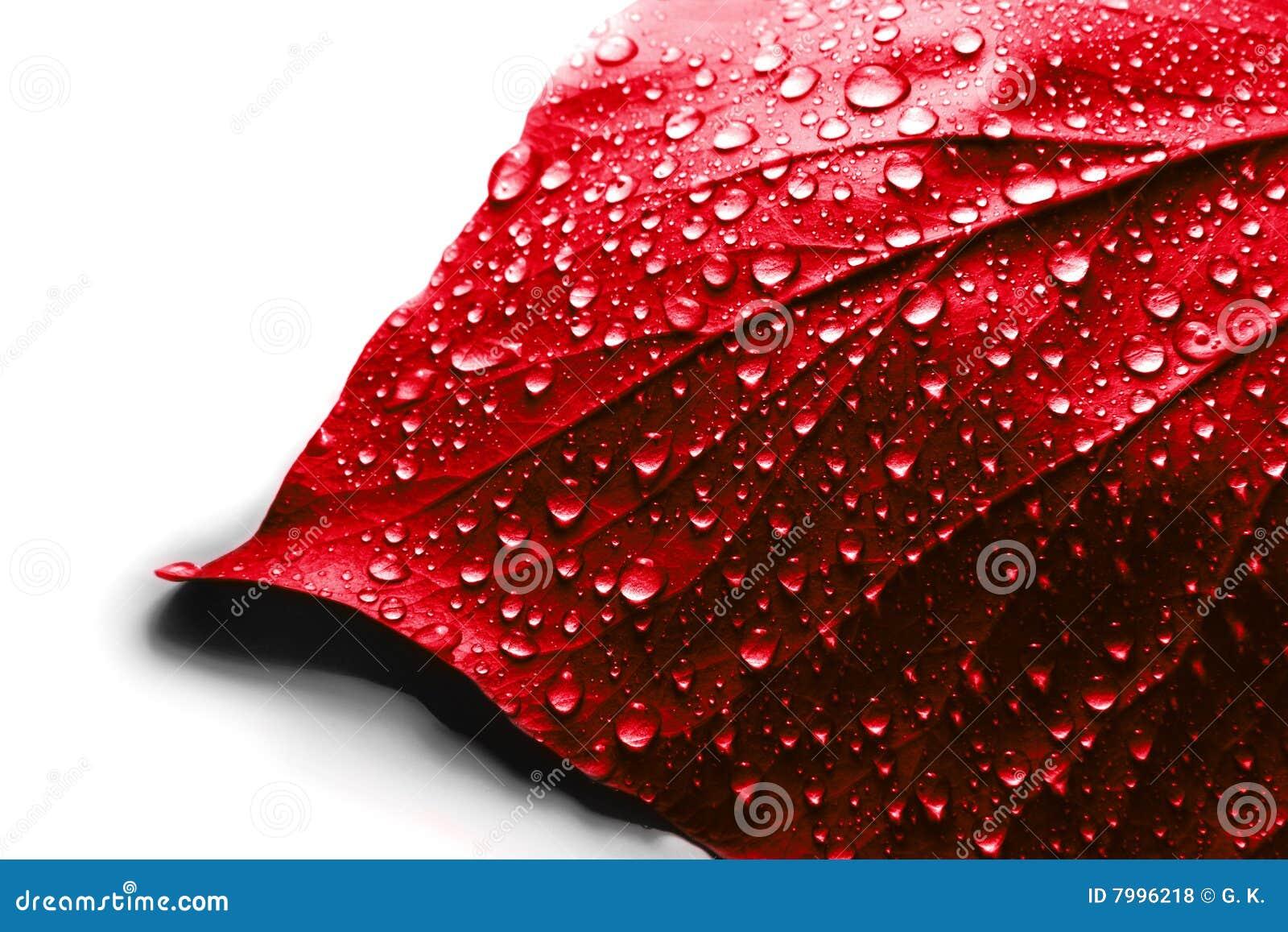 Валентайн красного цвета листьев дня