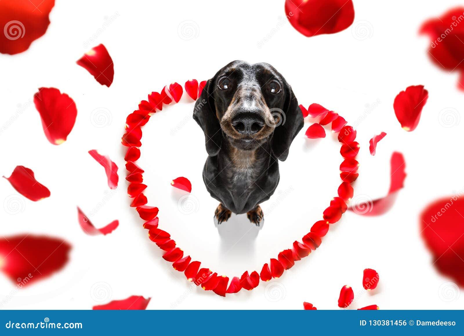 Валентинки выслеживают в влюбленности