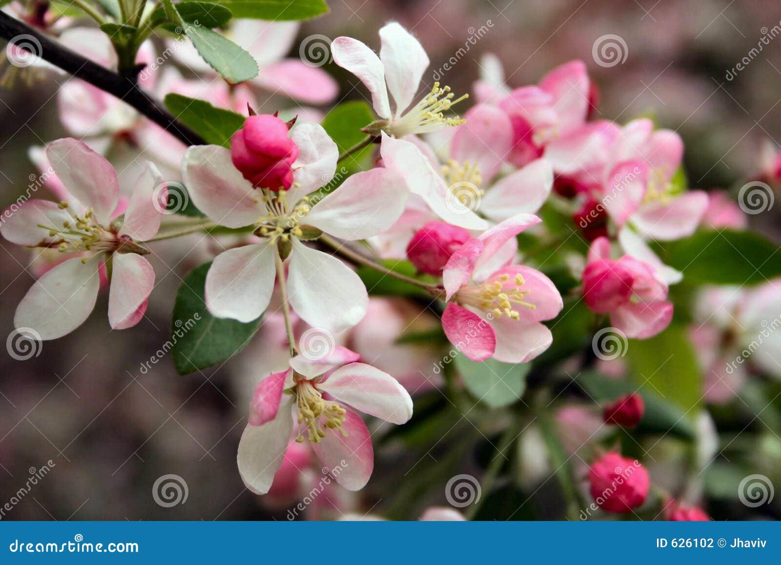 Download валы весны цветков стоковое фото. изображение насчитывающей brampton - 626102