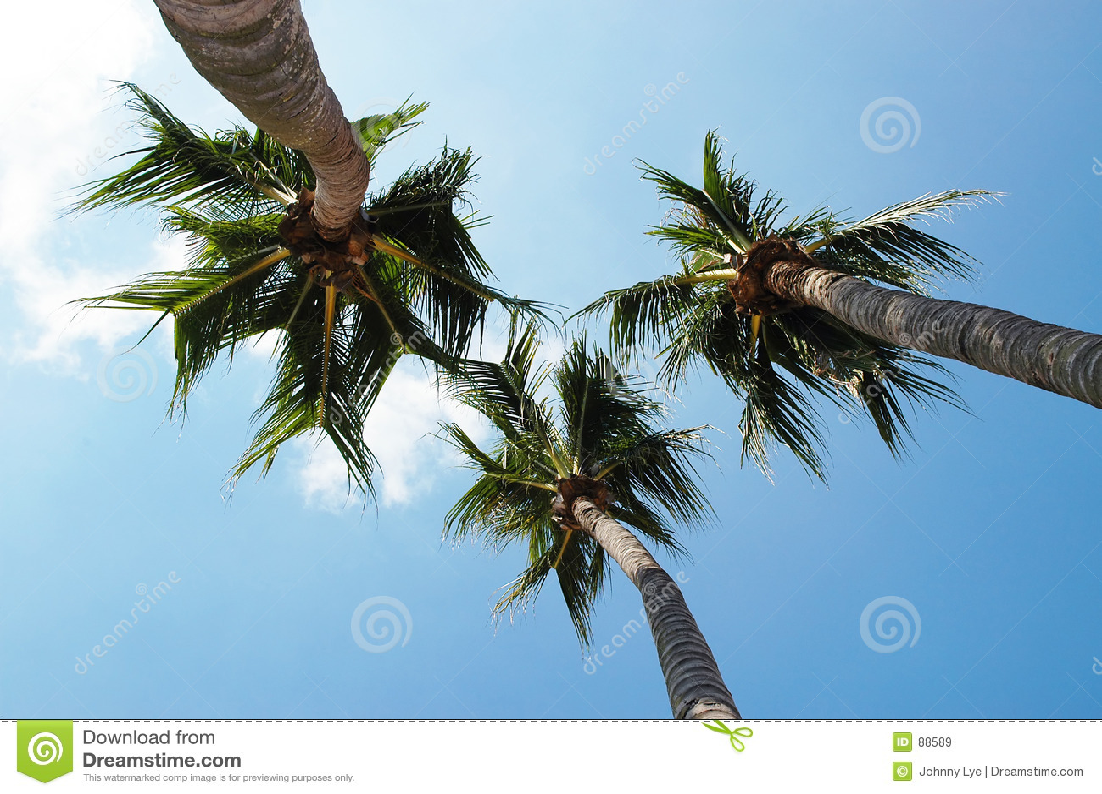 валы кокоса
