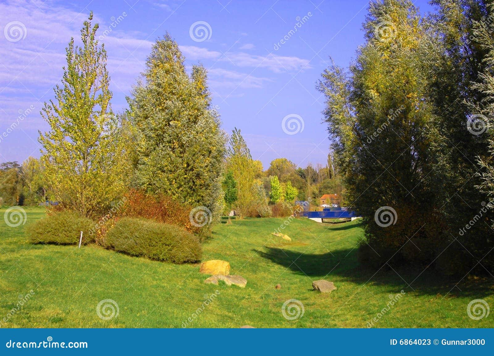 валы лета парка зеленого цвета травы