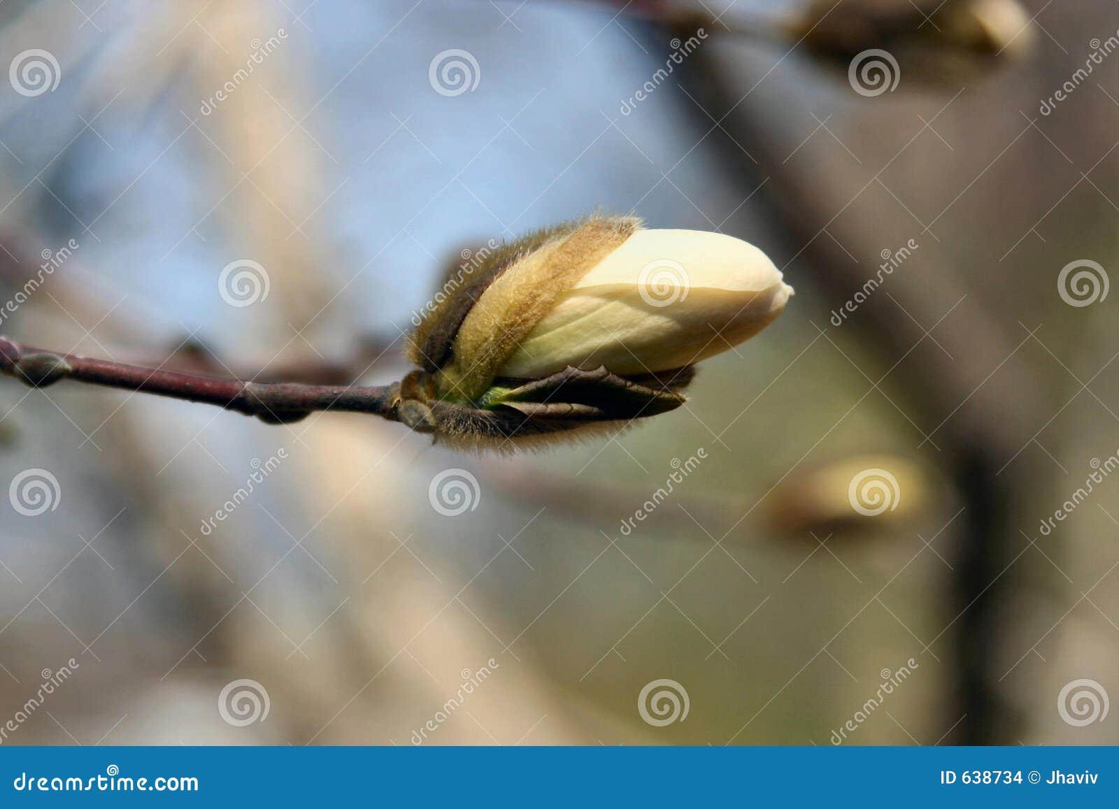 Download валы цветеня стоковое фото. изображение насчитывающей природа - 638734