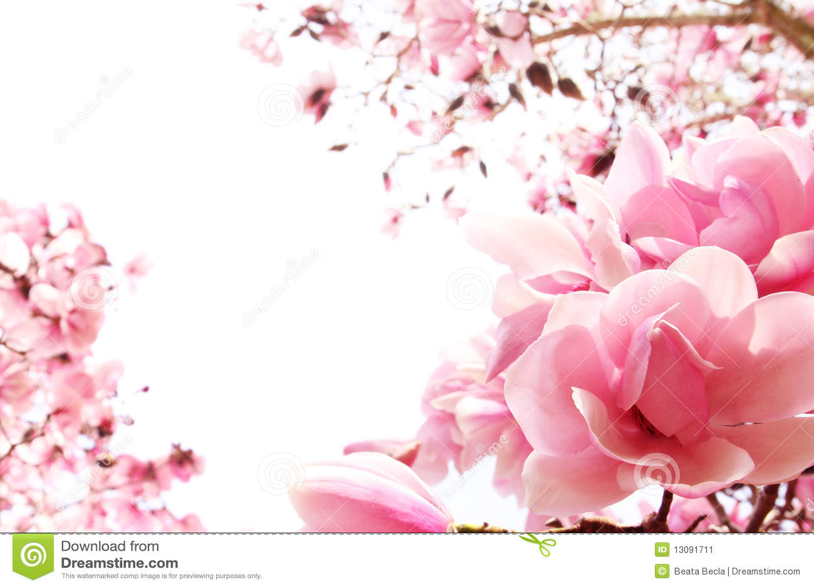 вал весны magnolia цветеня