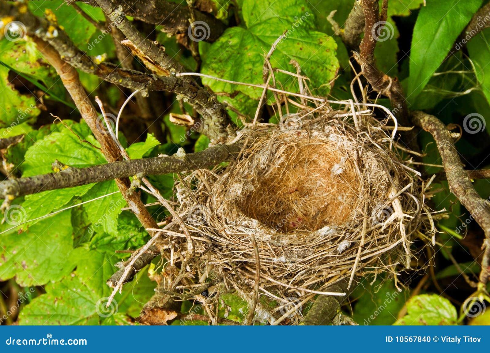 вал гнездя s птицы
