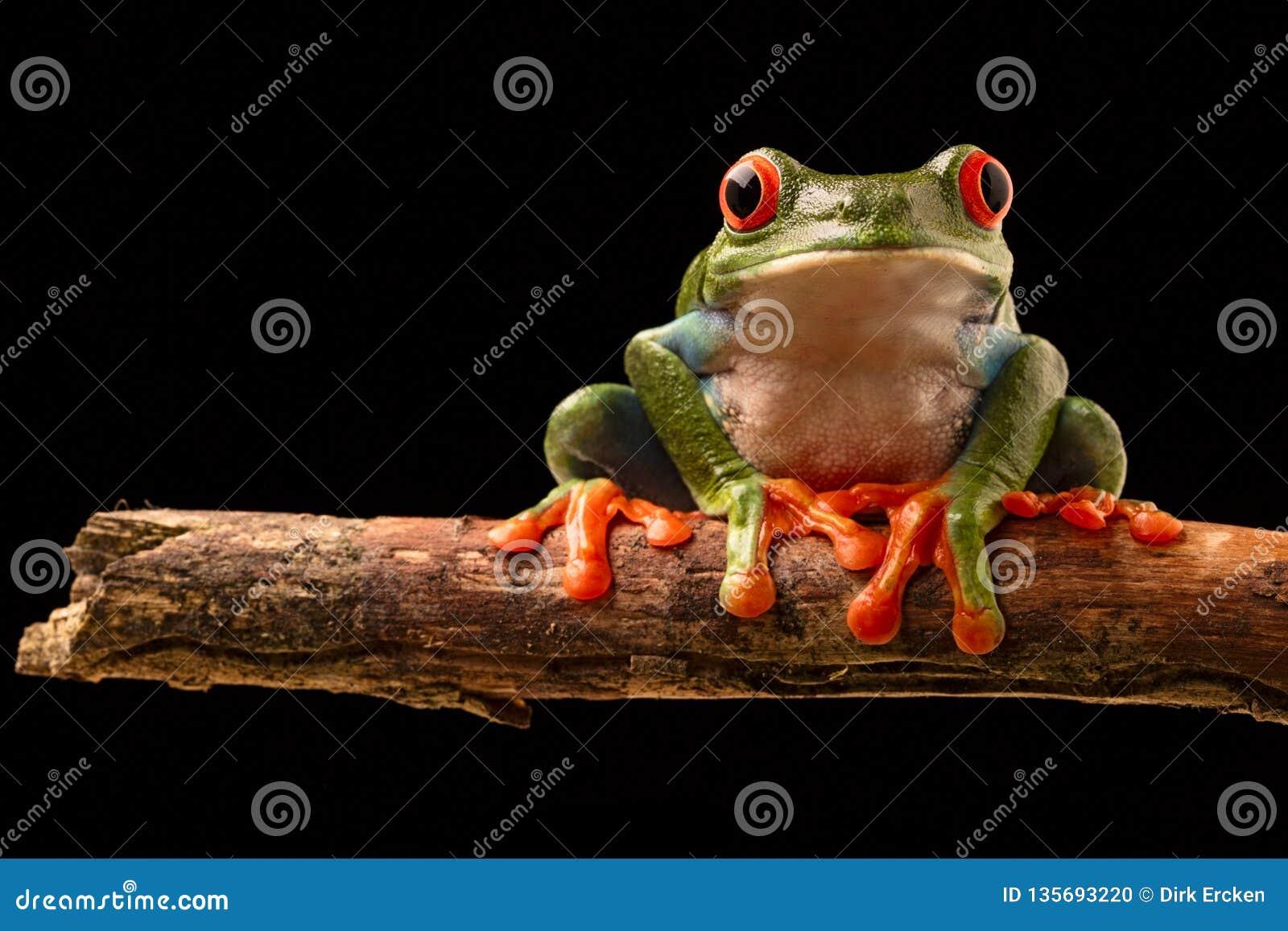вал красного цвета лягушки глаза