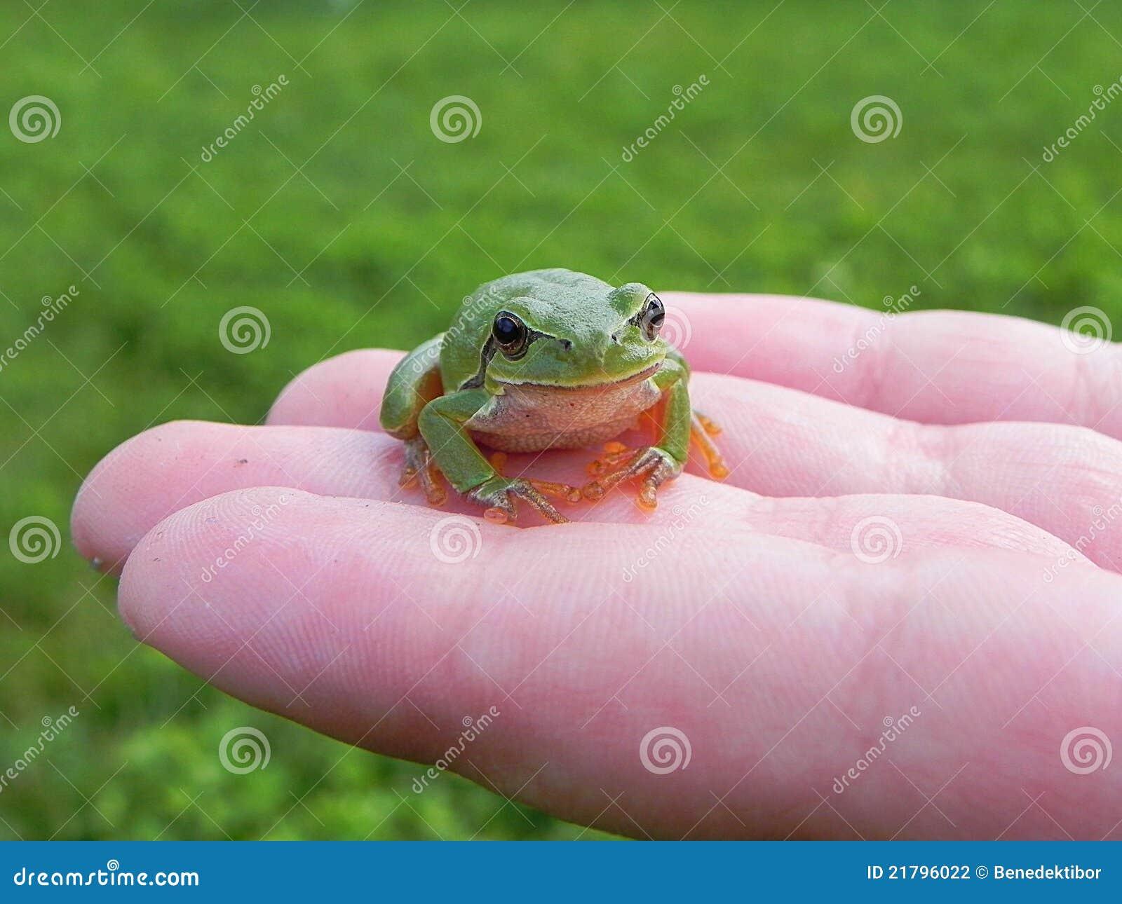 вал лягушки перстов