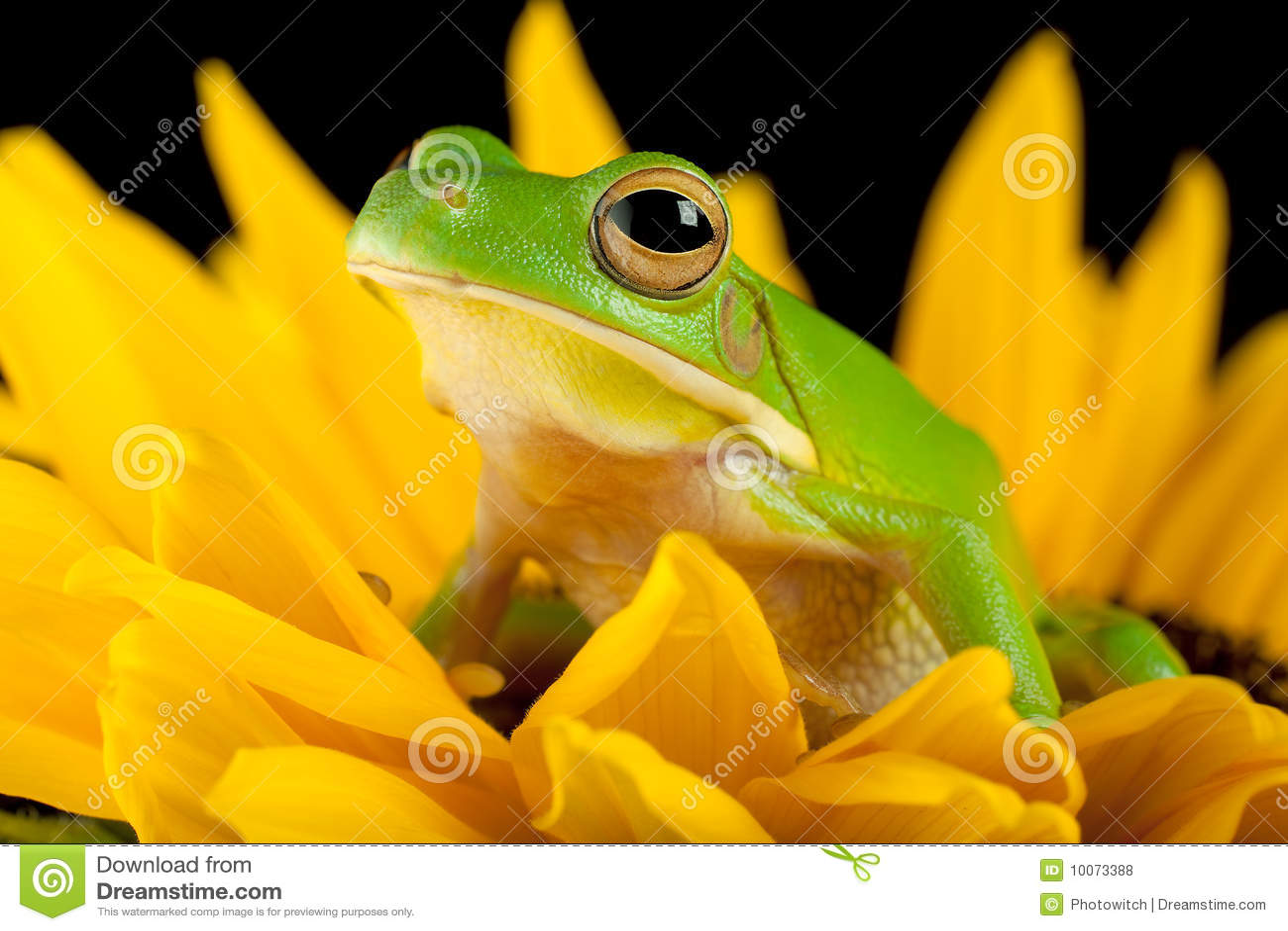 вал лягушки цветка