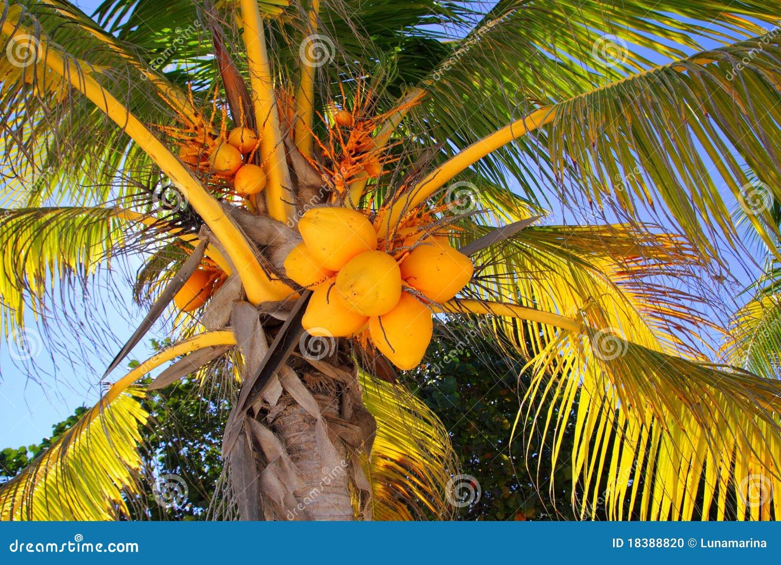 вал символа ладони детали кокосов тропический