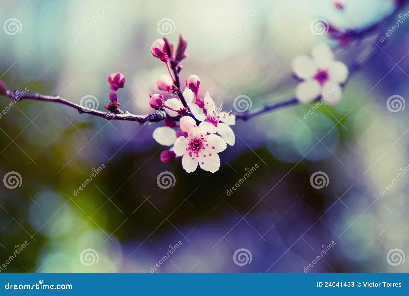 вал цветка миндалины