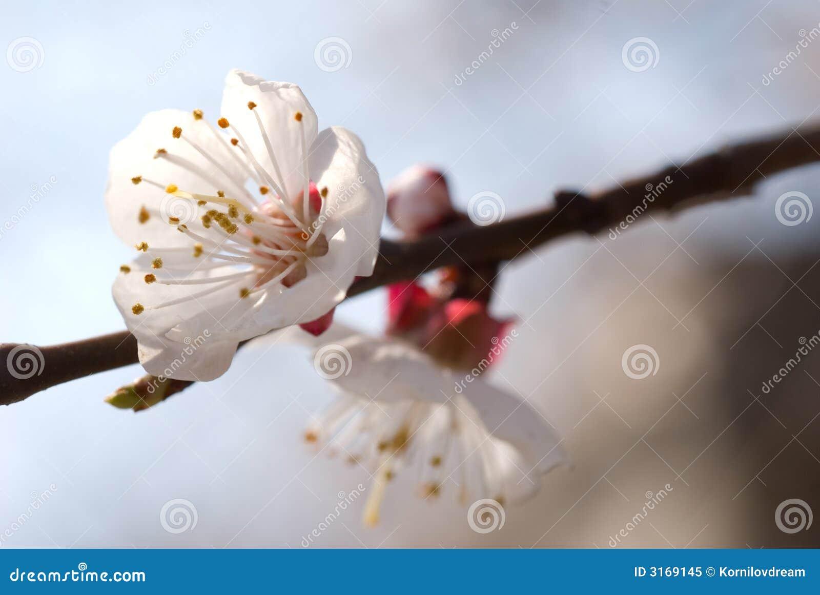 вал цветка