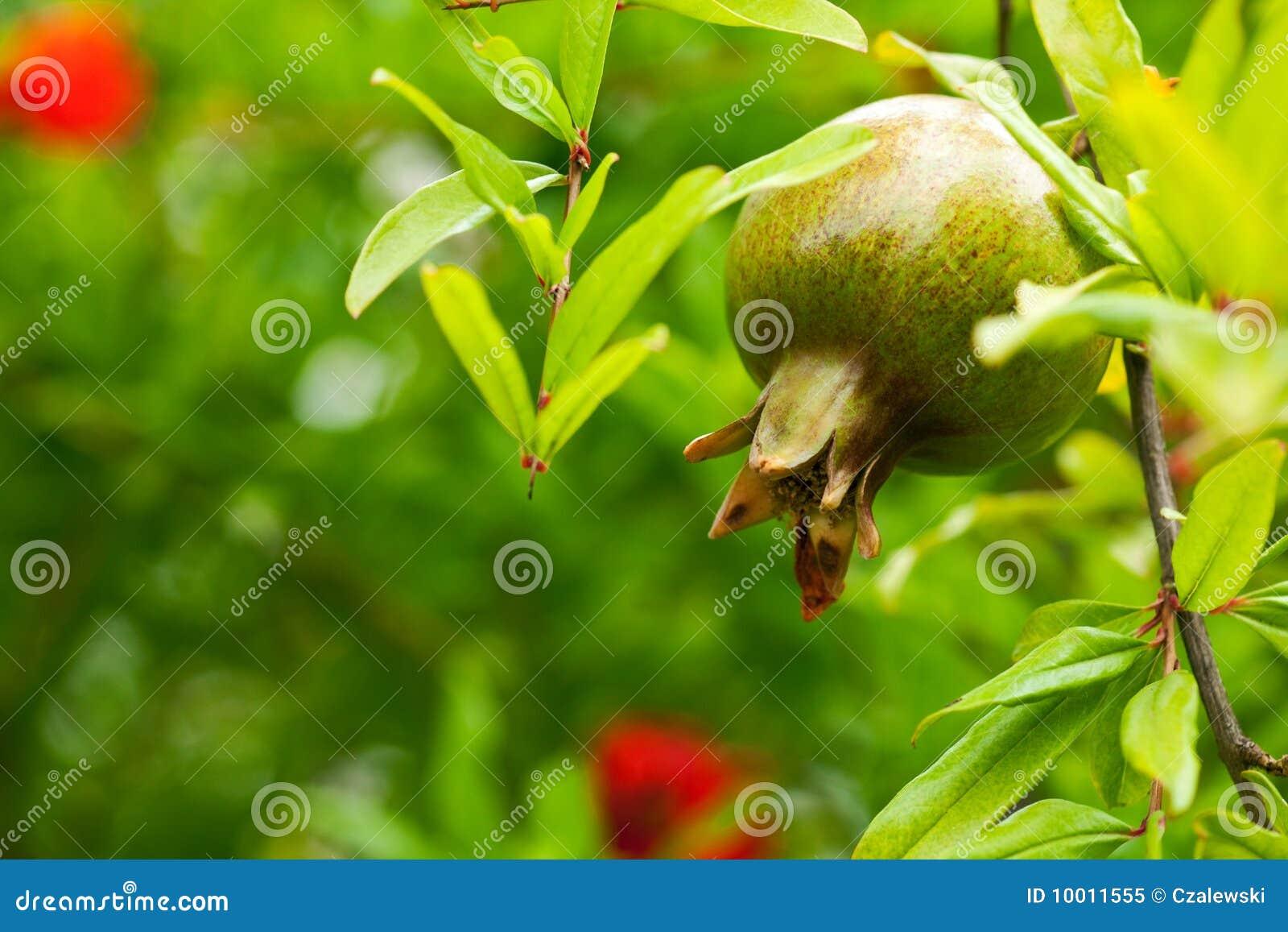 вал pomegranate