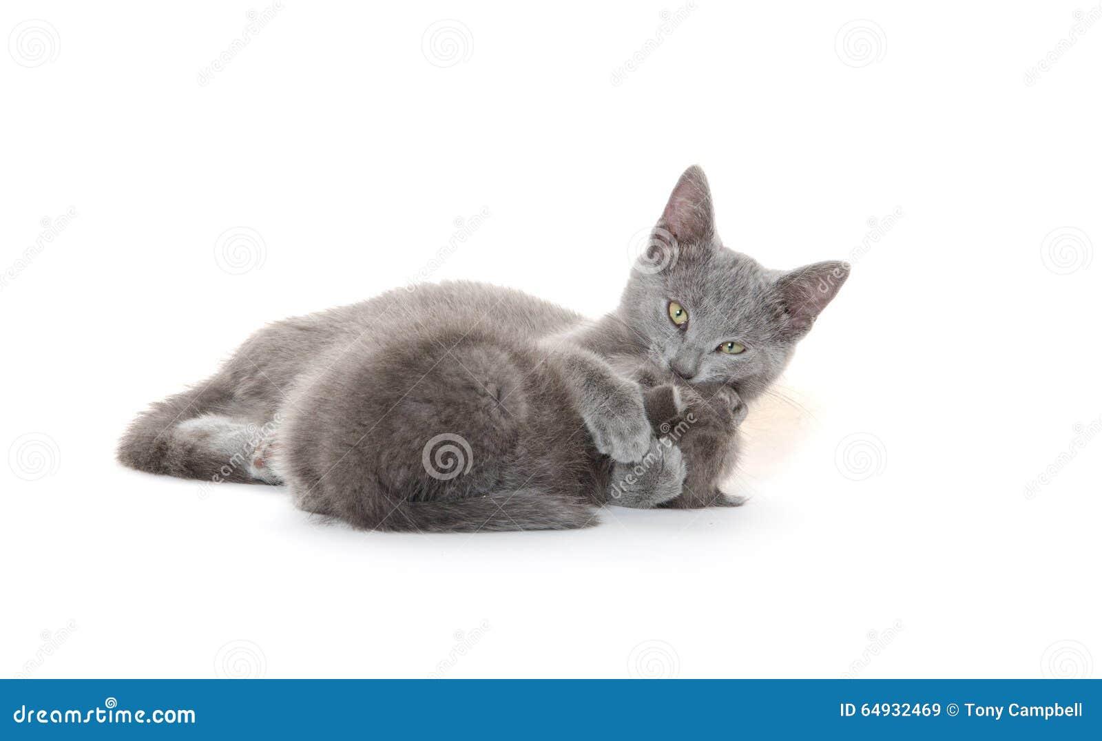 Ванна кота