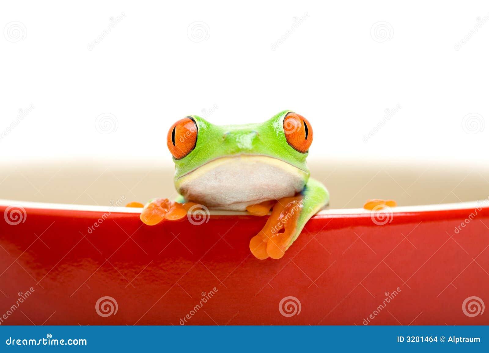 варить изолированный лягушкой бак o
