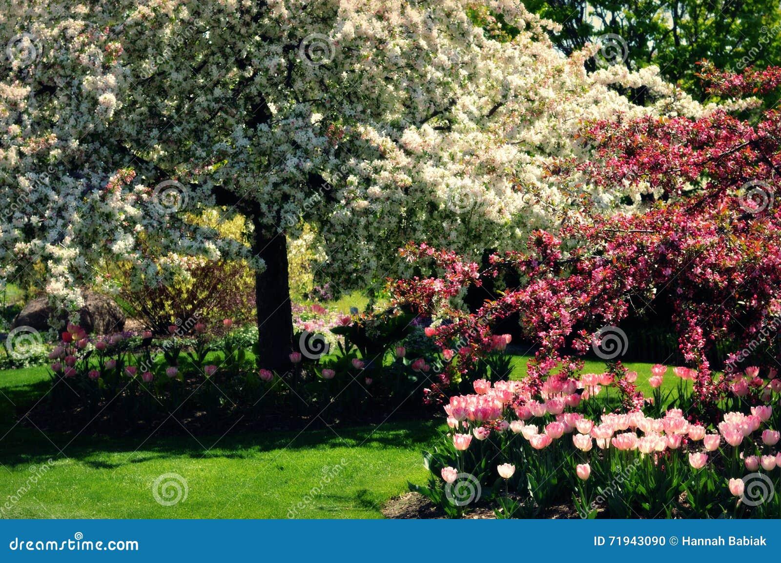 вал весны ветви цветений цветеня яблока