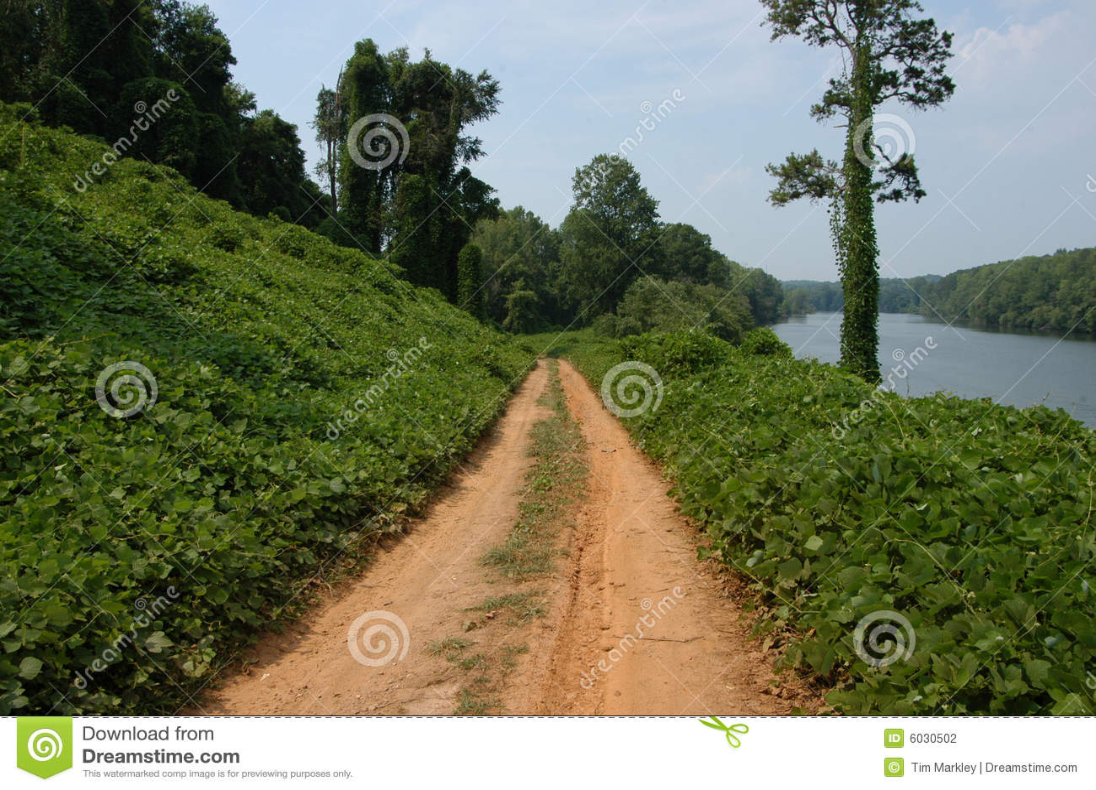 вдоль путя kudzu