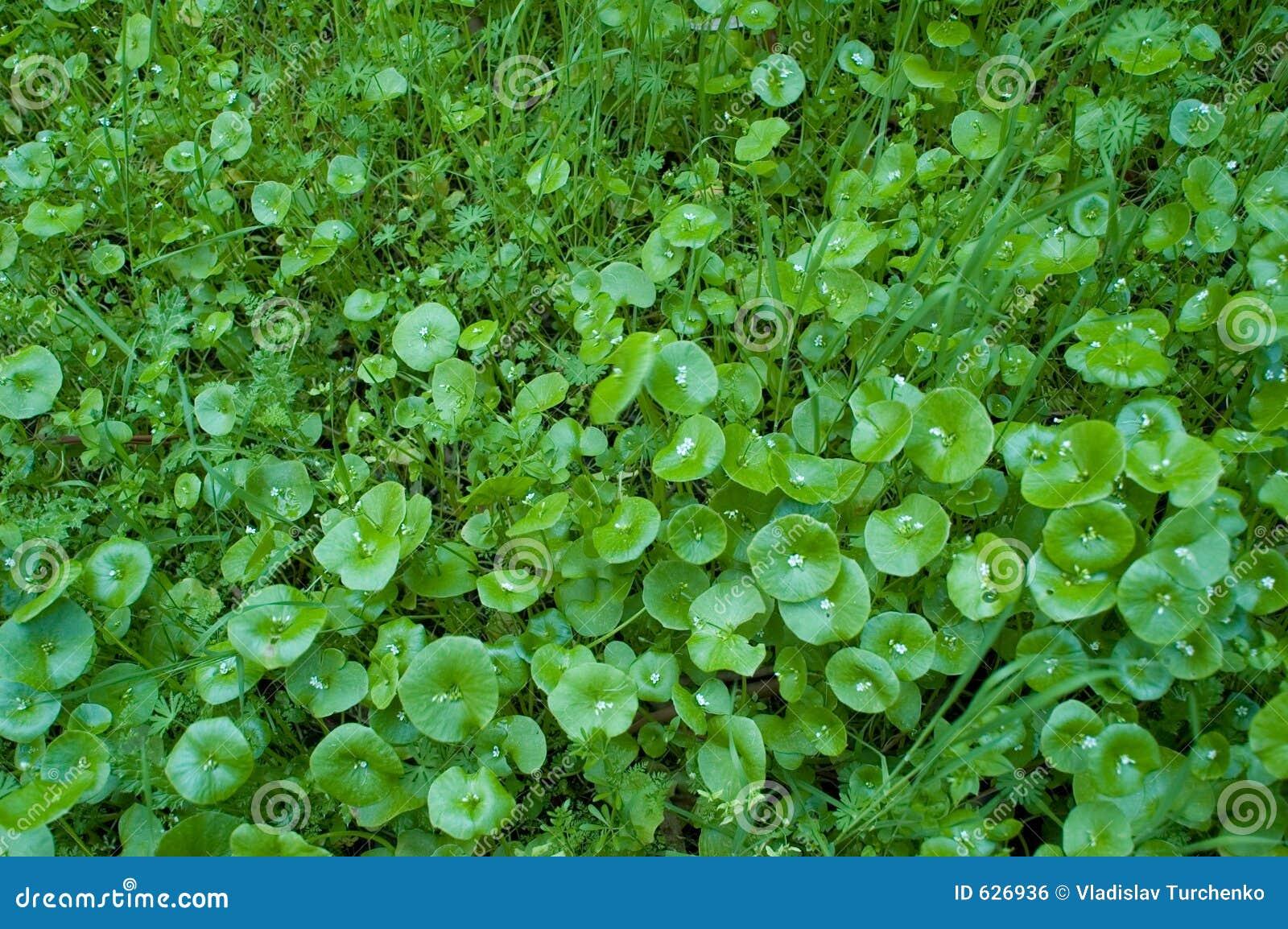 Download вегетация одичалая стоковое фото. изображение насчитывающей вегетация - 626936