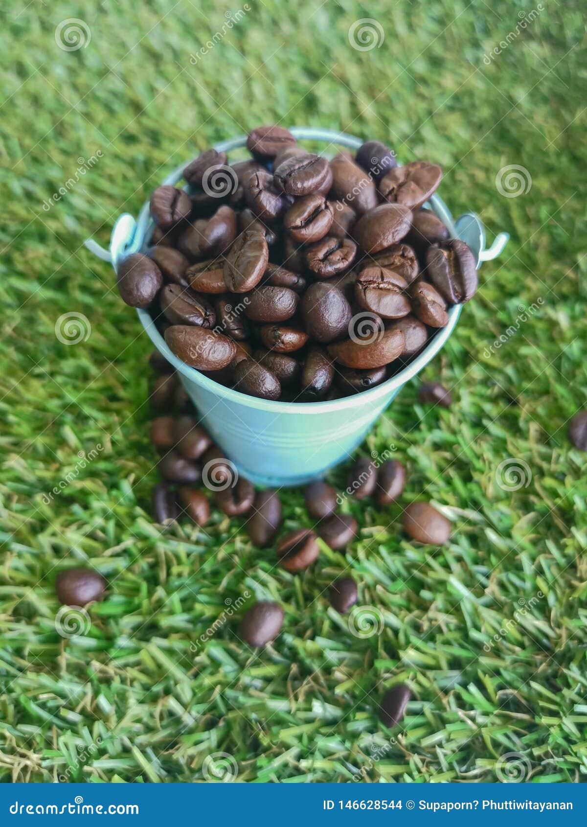 ведро ‹the†‹in†‹coffee†на зеленом цвете поля