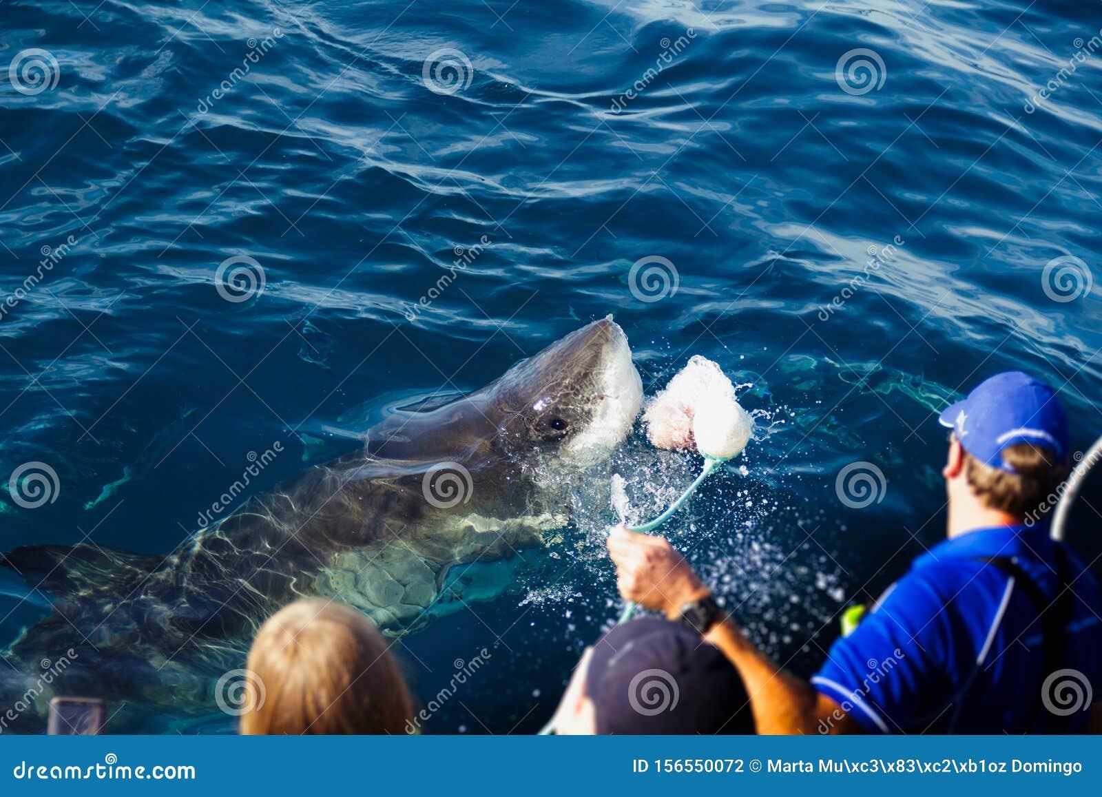 Охота на акул | 1155x1600