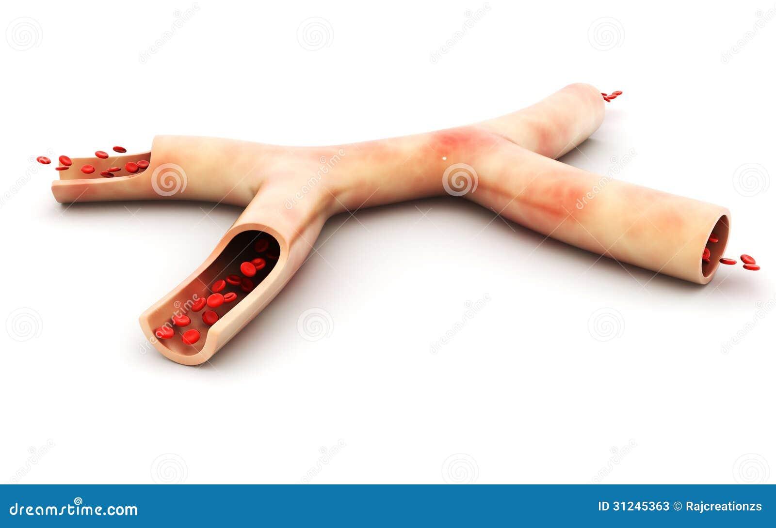 Вена и клетки крови крови