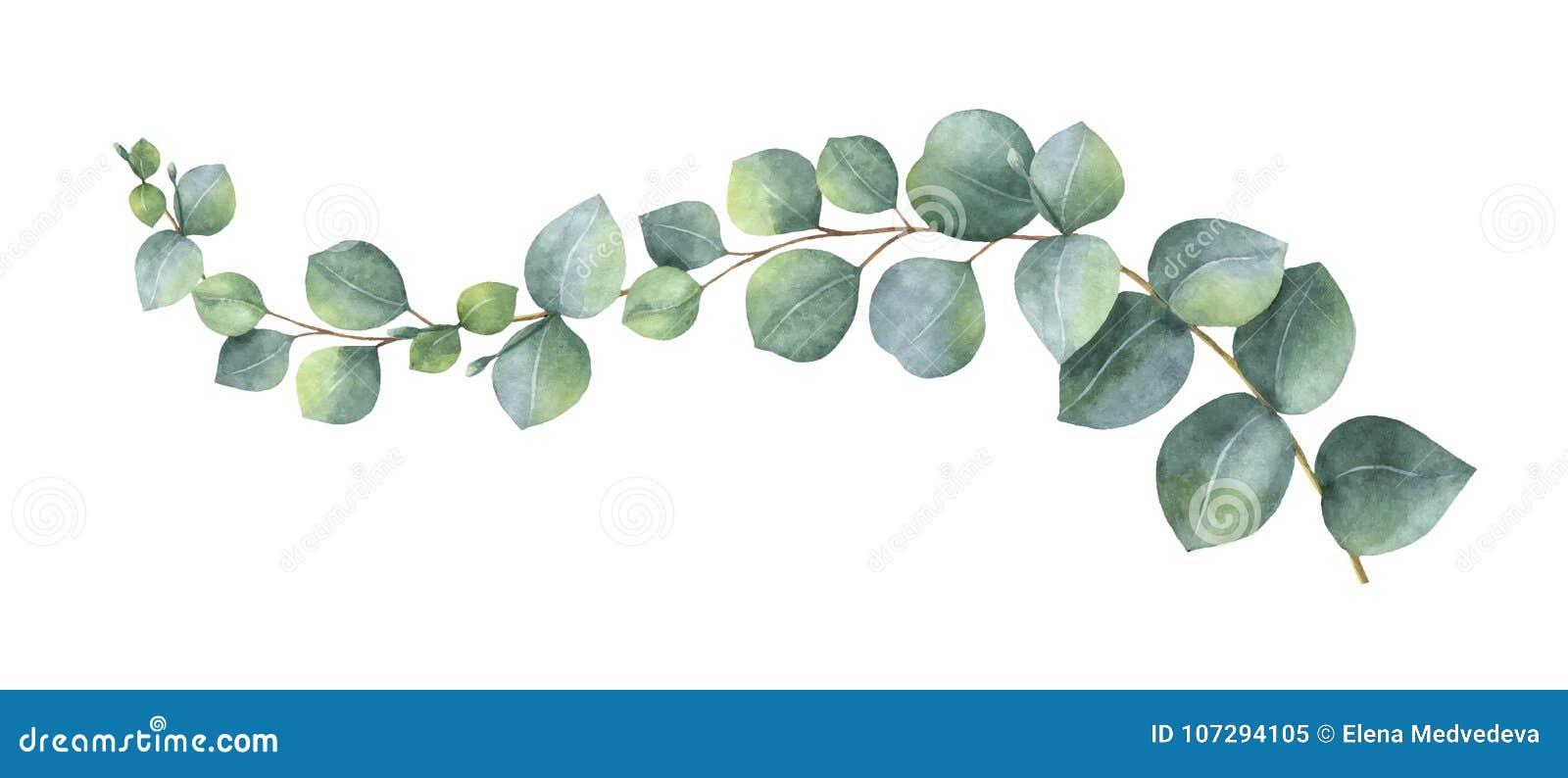 Венок вектора акварели с зелеными листьями и ветвями евкалипта