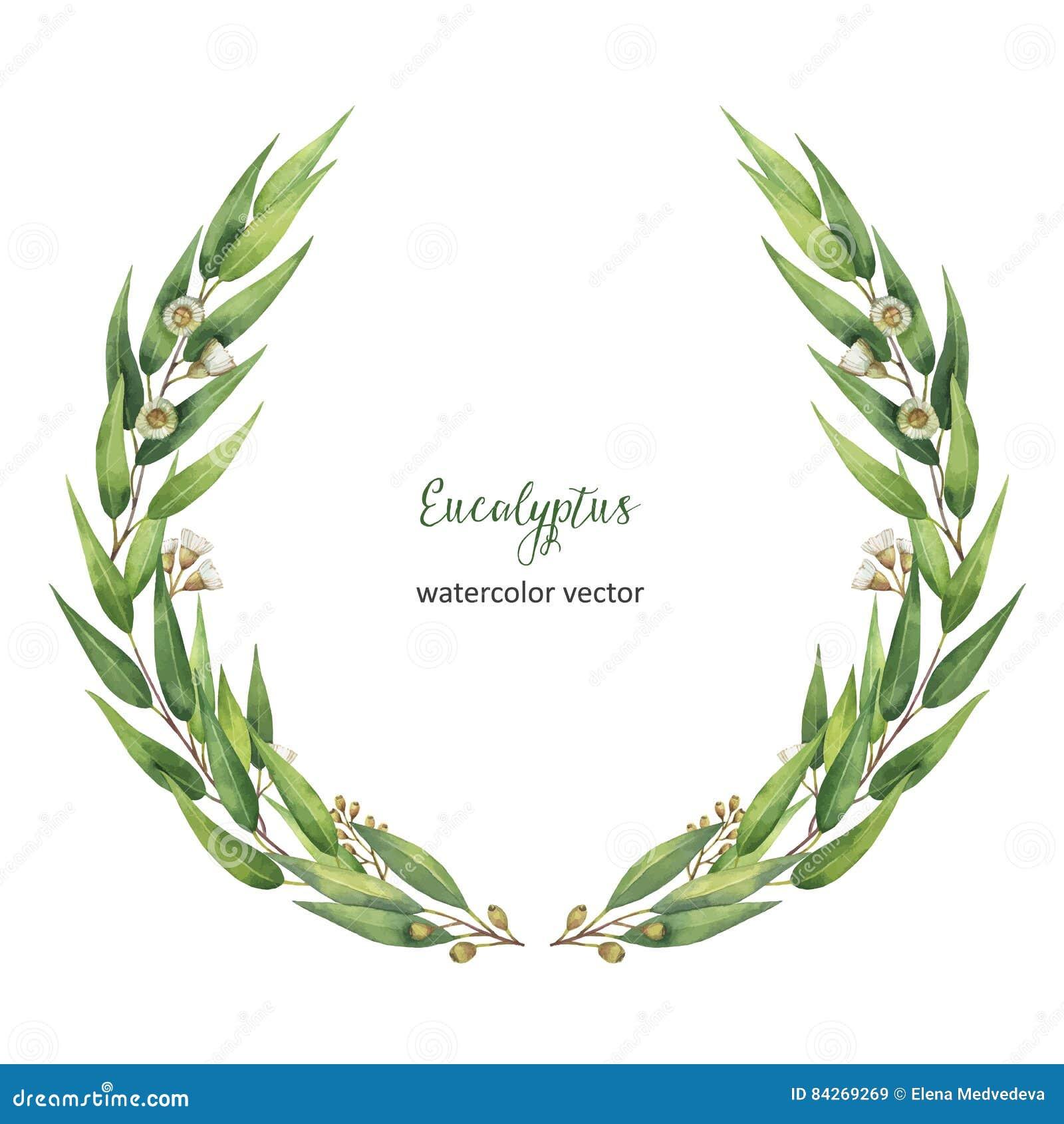 Венок вектора акварели круглый с зелеными листьями и ветвями евкалипта