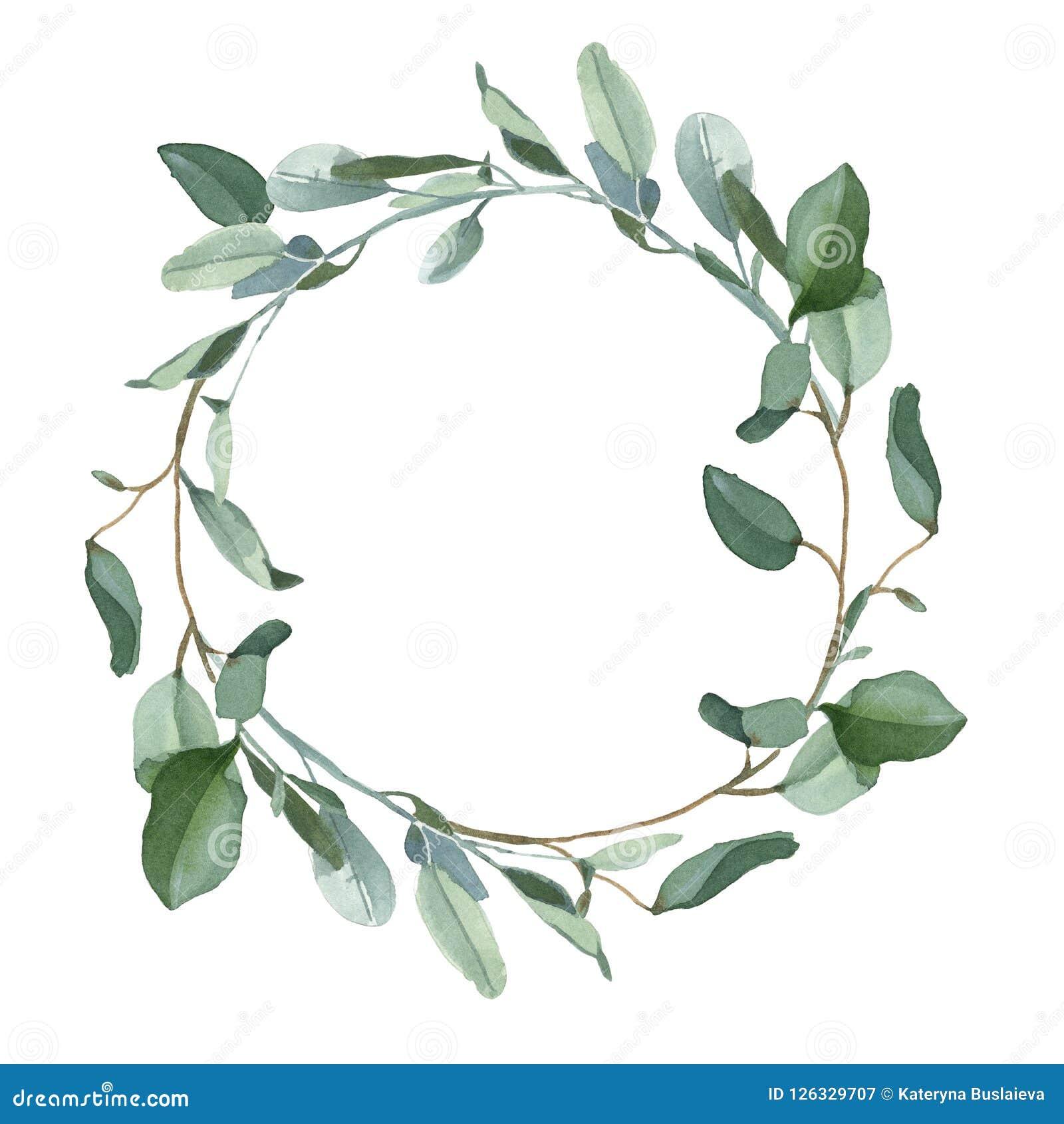 Венок зеленых листьев eucalypt изолированных на белой предпосылке