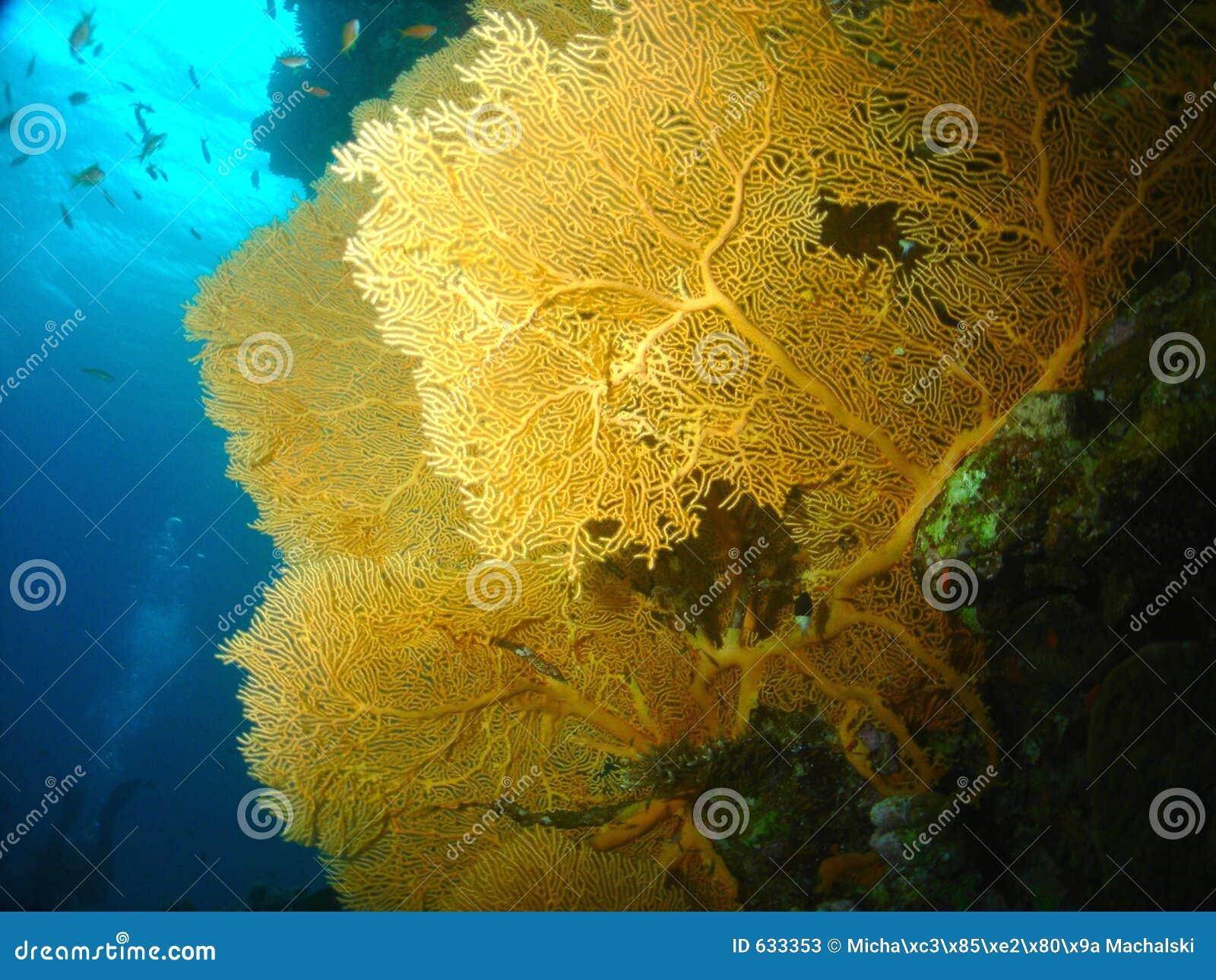 Download вентилятор коралла стоковое изображение. изображение насчитывающей yellow - 633353