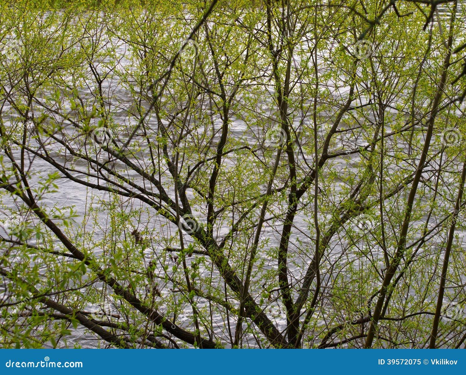 Картинки весны с вербой