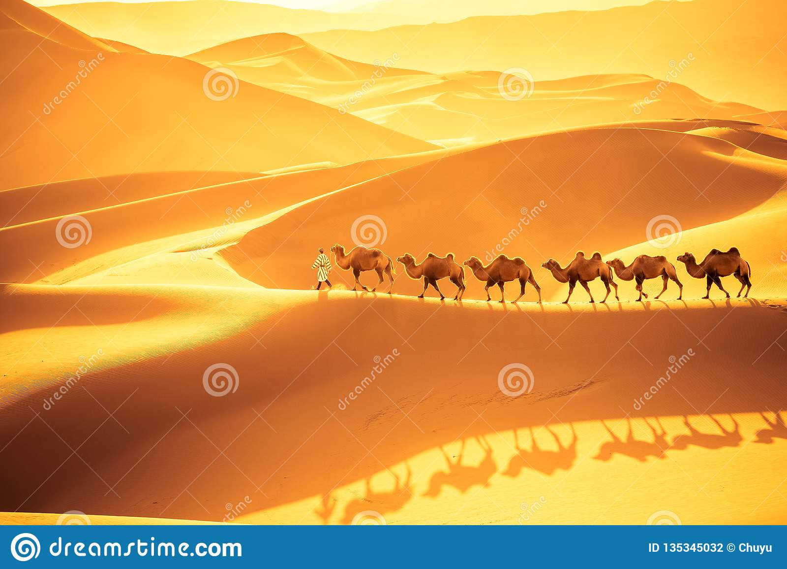 Верблюды пустыни объединяются в команду