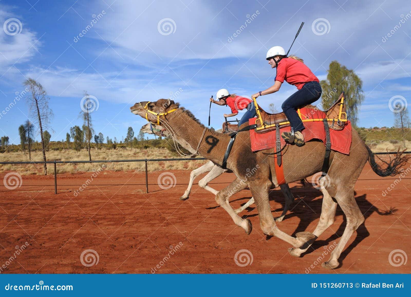 Верблюд участвуя в гонке в северных территориях Австралии Uluru Yulara