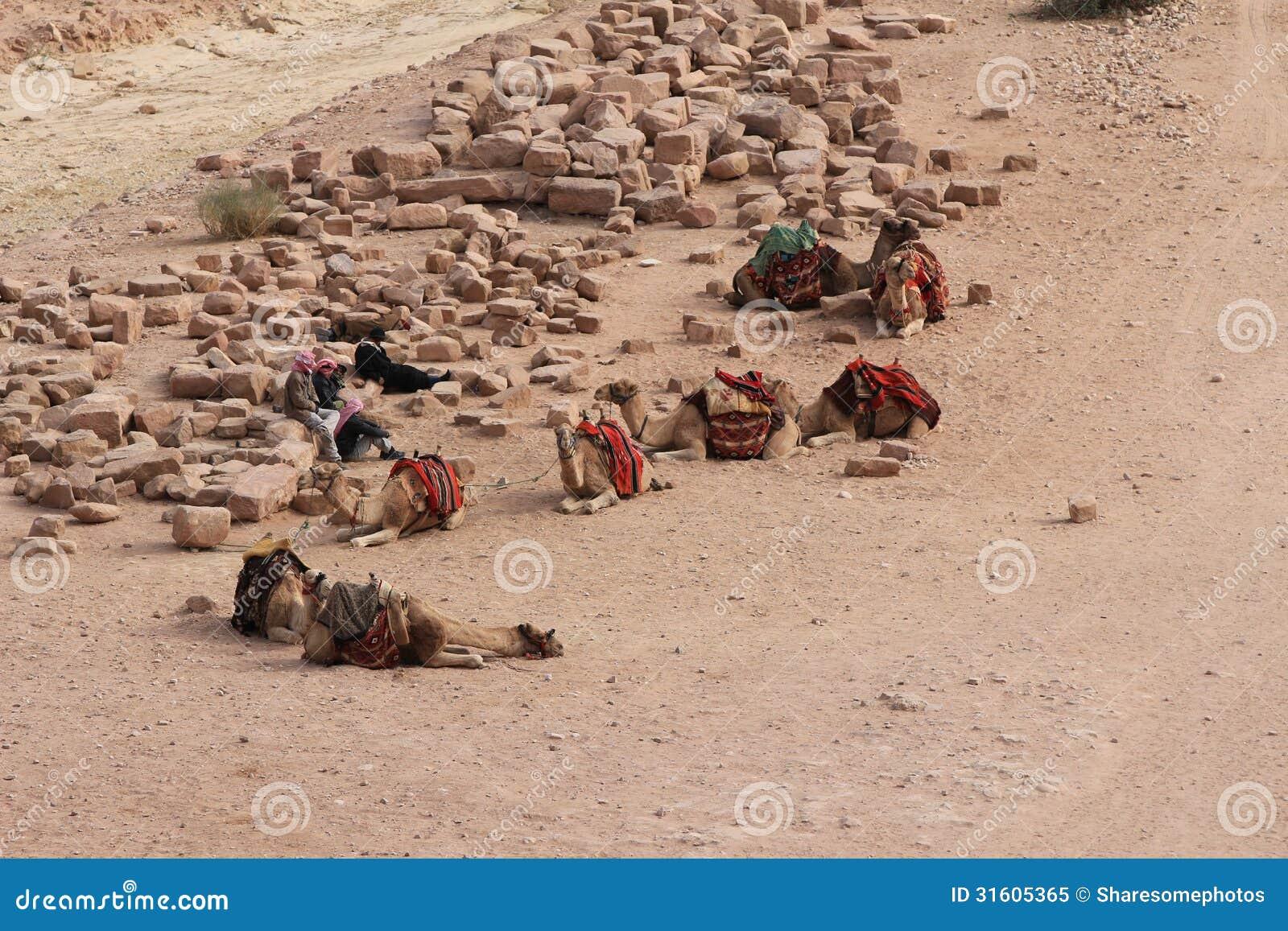 Верблюды на Petra, Джордан