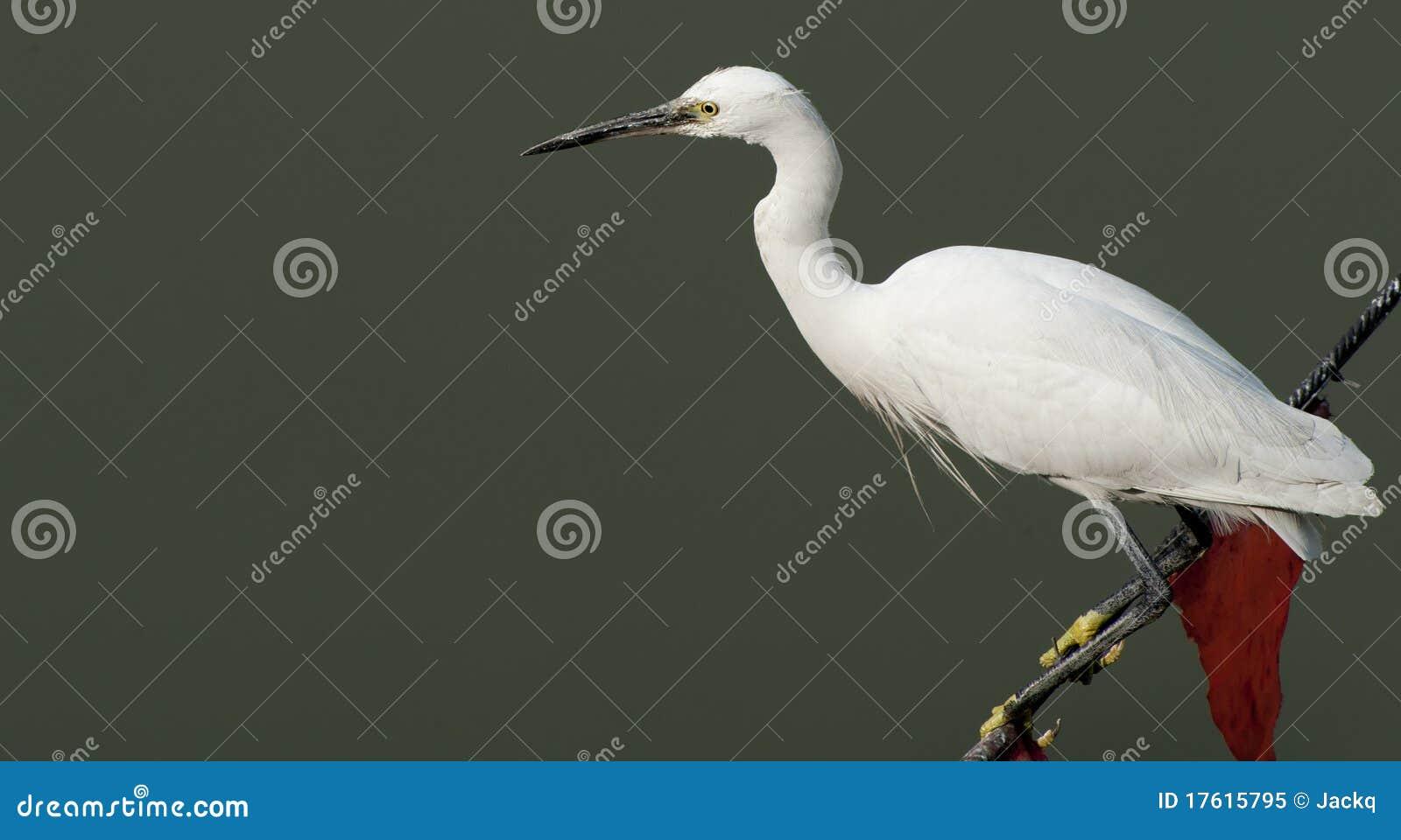веревочки egret стоя бел