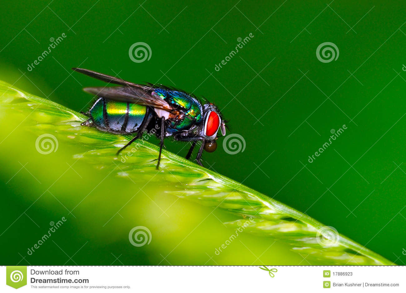 вертел дома мухы шарика