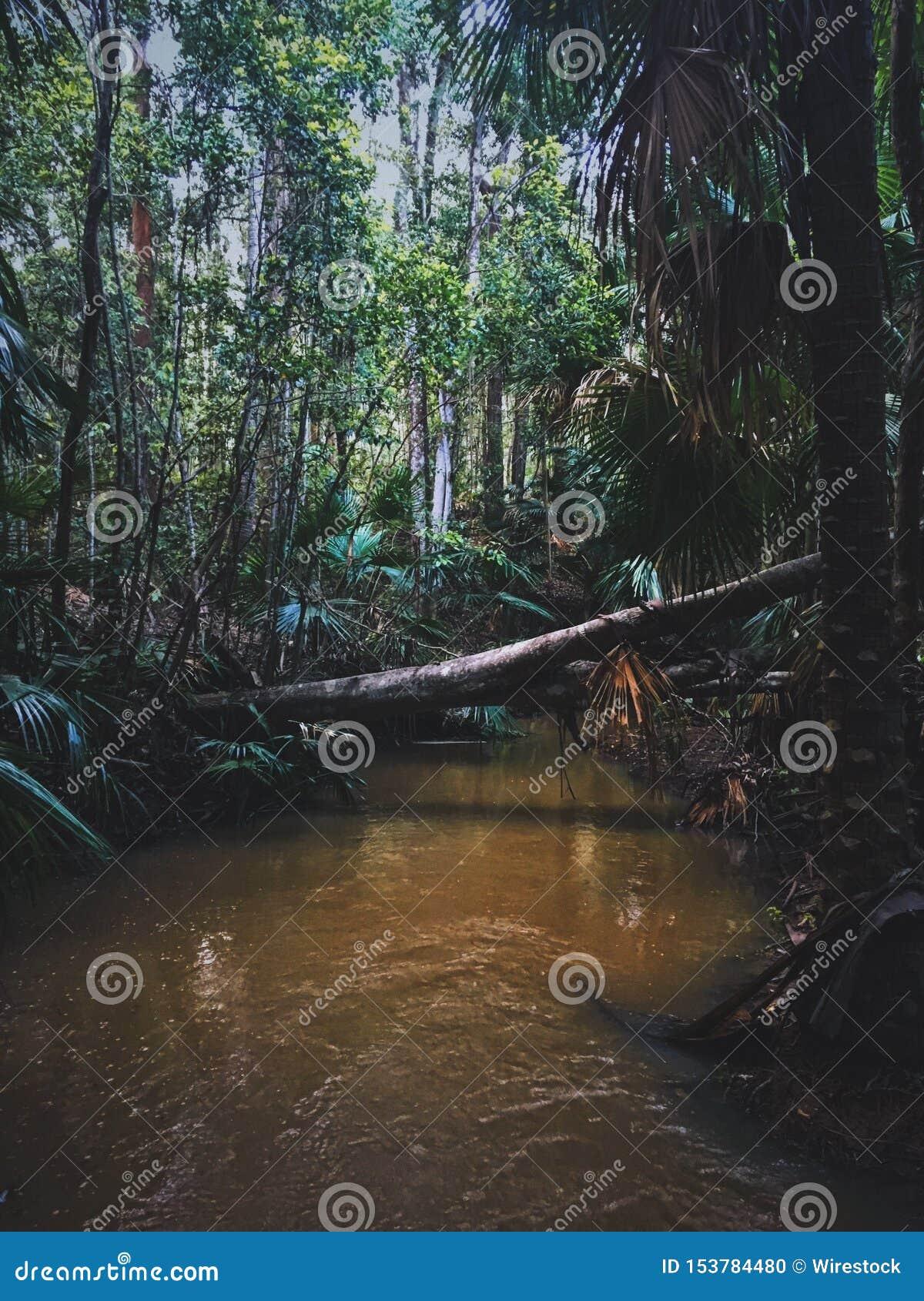 Вертикальная съемка упаденного дерева над озером в лесе с высокими деревьями