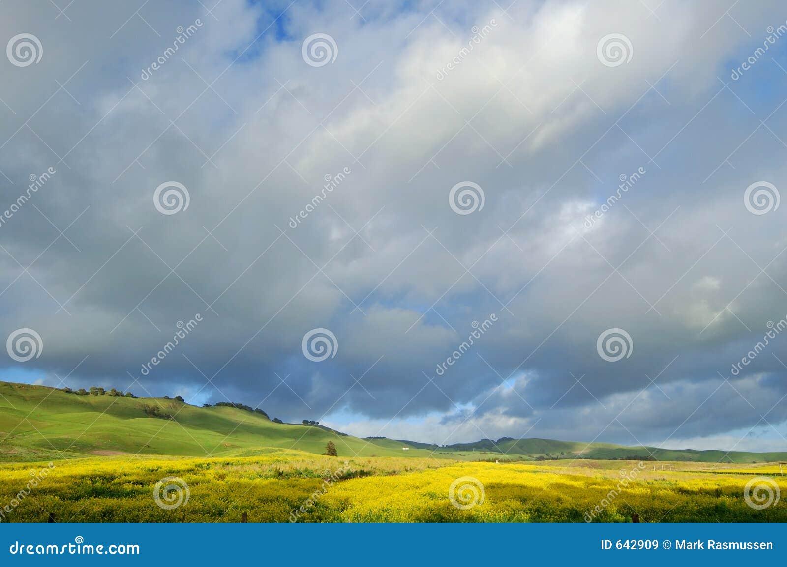 Download весеннее время лужка стоковое изображение. изображение насчитывающей флора - 642909