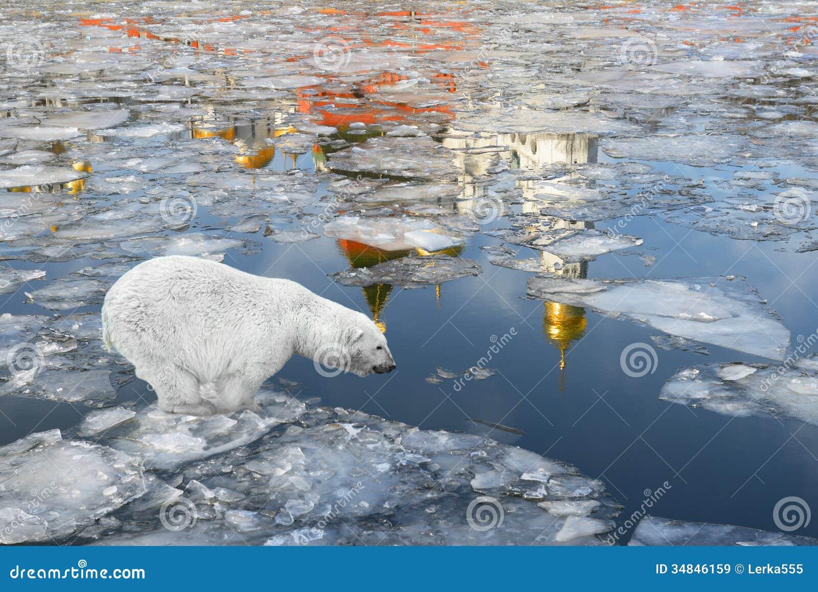 медведь отражающийся на льду фото автор ждет вкладчиков заемщиков