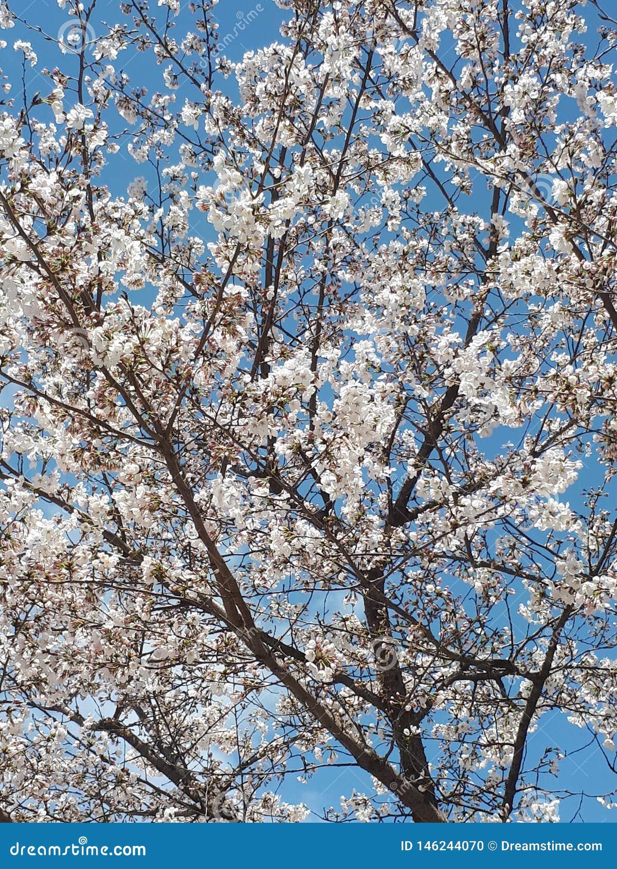 Весна в Сеуле & x28; Южное Korea& x29;